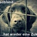 Deutschland – traurige Aussichten…